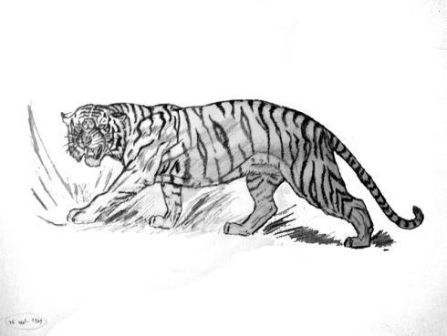 109 tigre