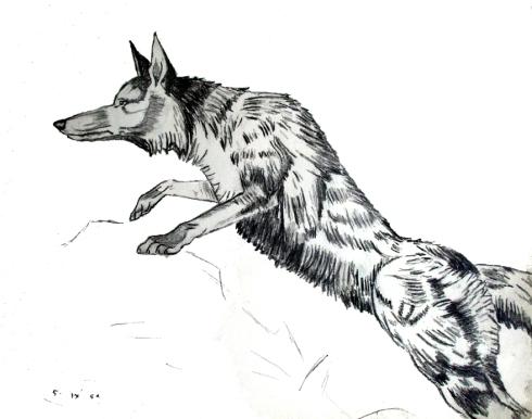 110 zorro