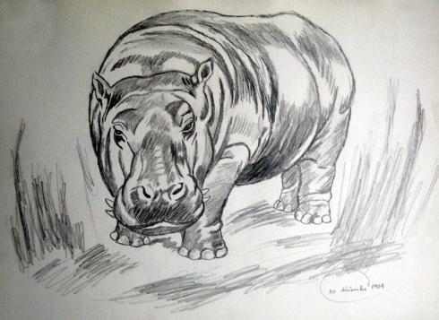 121 hipopotamo