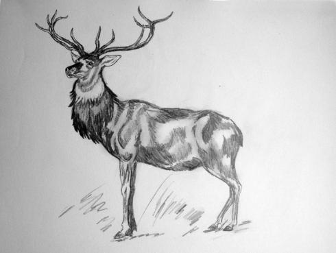 122 ciervo