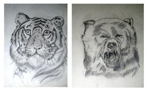 123 tigre