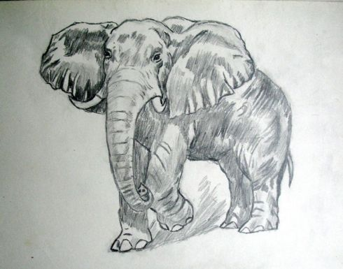 127 elefante