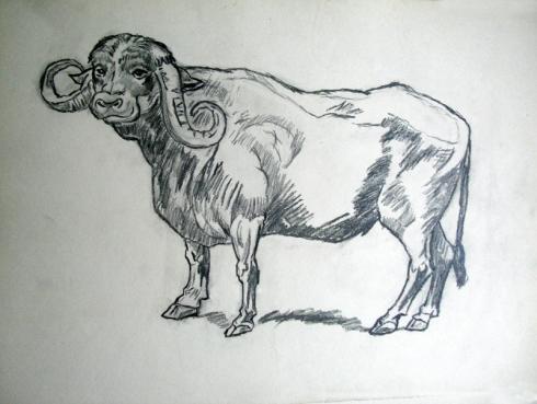 128 bufalo