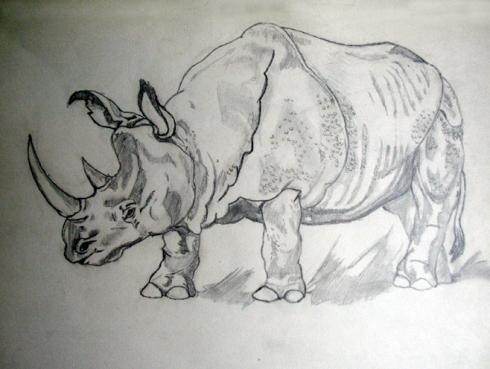 129 rinoceronte