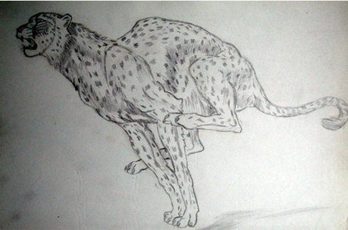 136 guepardo
