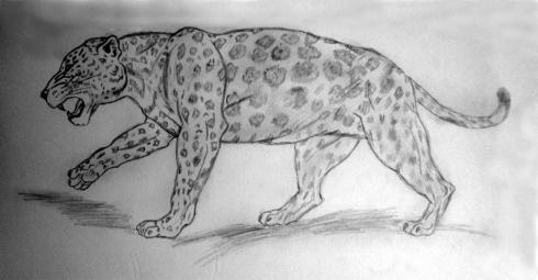 139 leopardo