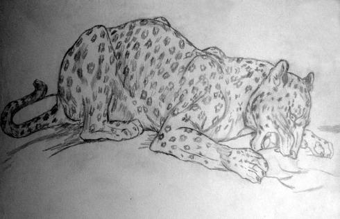 141 leopardo