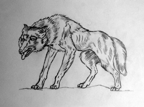142 lobo