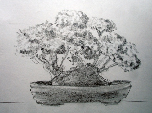 307 bonsai