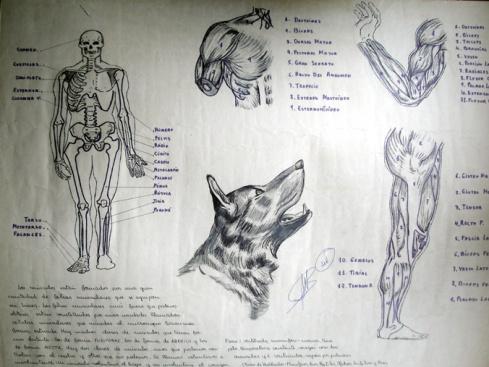 314 anatomia