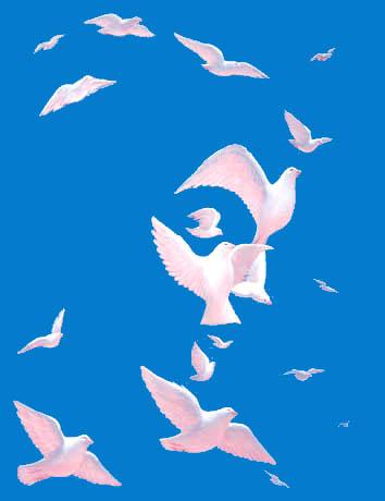 ocatavio ocampo paloma