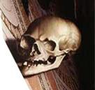 009 Skull-Ambassadors