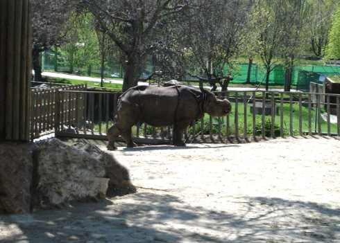 031 Zoo Madrid